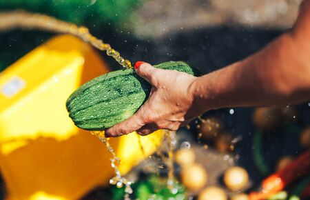 Washing vegetables, woman hands wash green zucchini outdoors sun light.