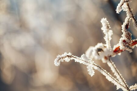 Winter landscape with frosty trees and bushes Banque d'images - 135495710