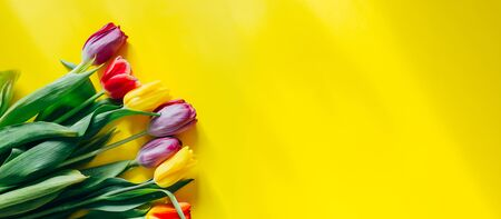 beautiful multi-colored tulips on a yellow background, top view, flowers in the corner of photo, long banner. Banque d'images