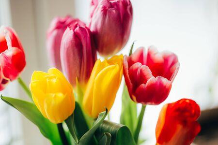 bouquet of colorful tulips Banque d'images
