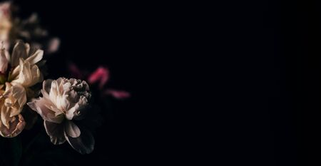 Beautiful delicate peonies on a dark background, blooming flowers, March 8, mother's day, birthday present. Banque d'images - 149853030