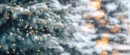 Christmas tree without decorations outdoor in park with bokeh, beautiful blue spruce snow fall.