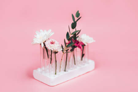 Beautiful flowers one by one arranged in test tubes on a pink background. 版權商用圖片