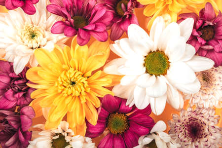 Background of beautiful different flowers, beautiful bouquet of flowers, a gift for all the holidays.