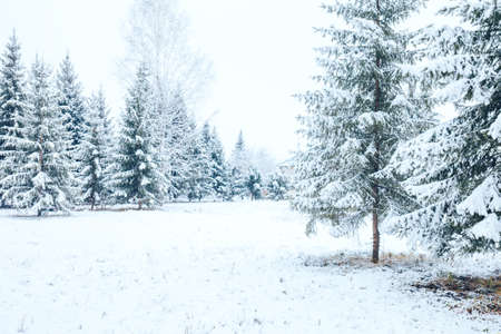 Winter forest with Christmas trees in the snow. Christmas and New Year mood.