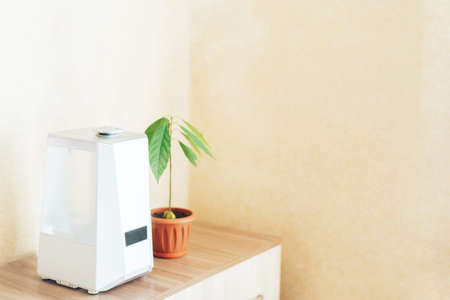 White humidifier on the nightstand next to an avocado sprout. Humidification, ionization and air purification. Health care concept. Banque d'images