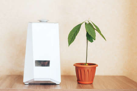 Humidifier is in working order, next to the house plant. Humidification, ionization and air purification. Health care. Disease prevention.