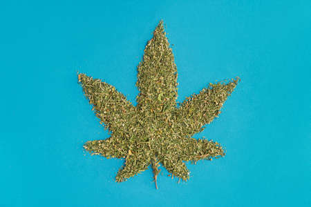 Dry and ground Cannabis with seeds in shape of Marijanna leaf on blue background.