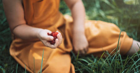 Child sitting on the grass holds raspberries in his hands. Banque d'images