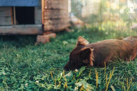 Brown dog sleeping on green grass near his house.