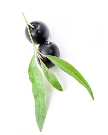 Black olives on branch it is isolated on white   photo