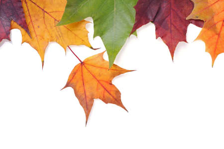 changing form: Autumn leaves on white background Stock Photo