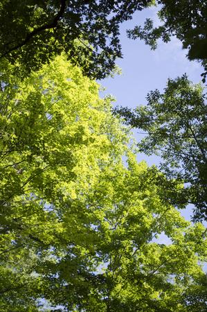 Tree Tops 2 Stockfoto