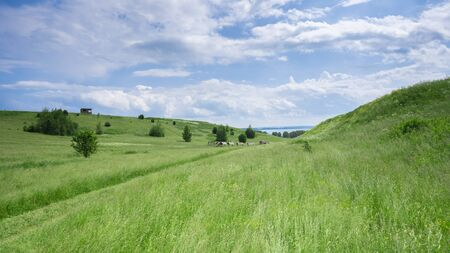 Landscape of the middle belt of Russia. Russian field.