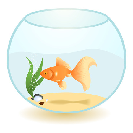 gold fish bowl: Goldfish in an aquarium isolated on a white background.  Illustration