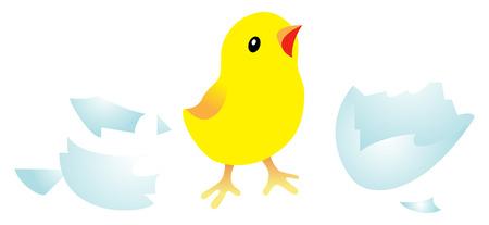 Chick nouveau-né avec agg shell. Isolé sur fond blanc.