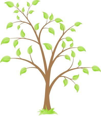 deciduous tree: �rbol de hoja caduca simple, aislado en un fondo blanco.  Vectores