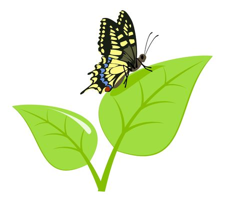 Black-yellow machaon on a green sprout. Stock Photo - 6857694