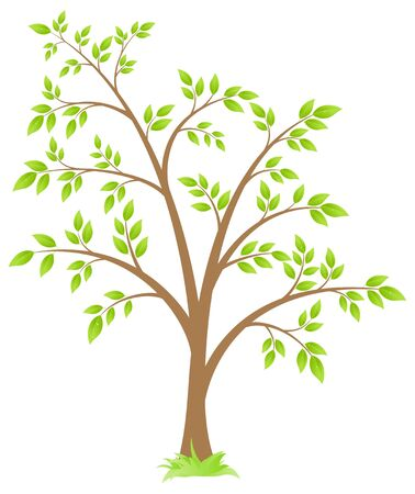 deciduous: deciduous tree, isolated on a white background. Illustration