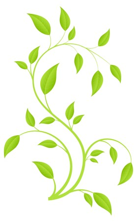 vine  plant: Green fresh plant, young sapling. isolated on a white.