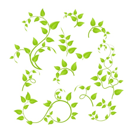 Conjunto de diversas plantas verdes, árboles jóvenes. Ilustración vectorial, aislado en un blanco.  Ilustración de vector