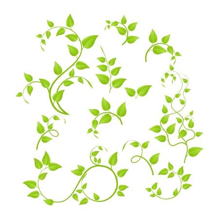 Het aantal verschillende groene planten, jonge aanplant. Vectorillustratie, geïsoleerd op een witte.  Vector Illustratie