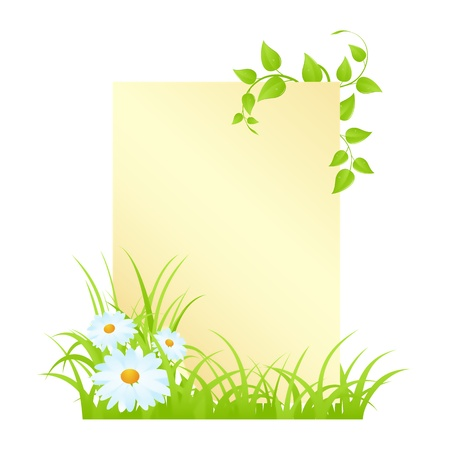 chamomile flower: Blank with camomiles and grass. Vector illustration, isolated on a white. Illustration