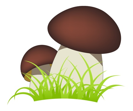 cep: Two ceps isolated on a white background.