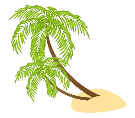 coconut leaves: Two palms isolated on a white background. Illustration