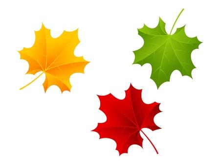 Красные, зеленые и оранжевые кленовые листья. Векторные иллюстрации.