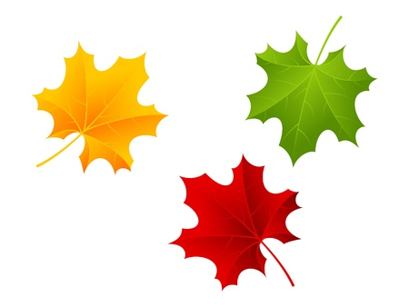 Red, green and orange maple leaves. Vector illustration.
