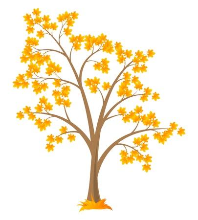 deciduous tree: Vector �rbol de hoja caduca, aisladas sobre un fondo blanco. Vectores