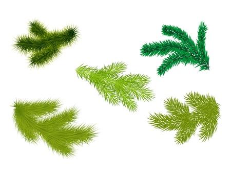 Set of fir branches. Vector illustrator. Stock Vector - 11659963