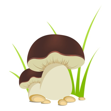 Two ceps isolated on a white background  Vector