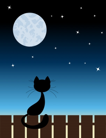 late: Black cat sit on a fence