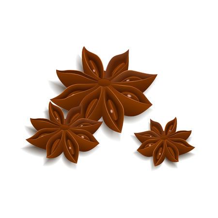 star anise: Star anise isolated on white background. Vector illustration. Illustration
