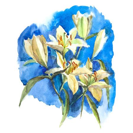 white lily: Acuarela lirio blanco sobre fondo azul. Ilustraci�n del vector.