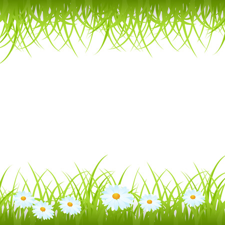 camomiles: Green grass frame with camomiles isolated on white. Vector illustration.