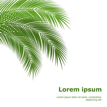 palmeras: Palma tropical deja. diseño de fondo. ilustración vectorial