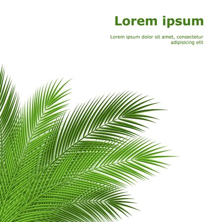vector: Tropical palm leaves. design background. vector illustration