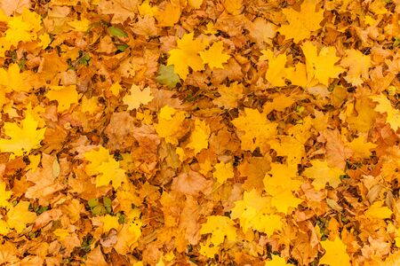 branches and leaves: Fall leaves for an autumn background , Colorful background of autumn leaves