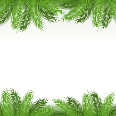 rainforest: Leaves of palm tree on white background as a template. Vector illustration.
