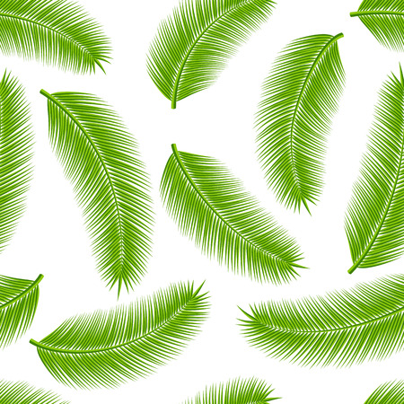 rainforest tree: Leaves of palm tree on white background as a seamless. Vector illustration.