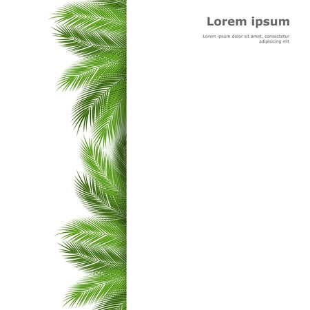 isolated: Palm leaves isolated on white background. vector background