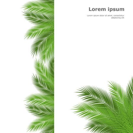 Palm feuilles isolées sur fond blanc. Vector illustration Vecteurs