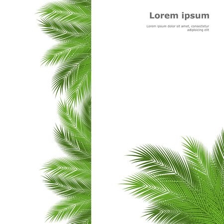 frond: Palm leaves isolated on white background. Vector illustration