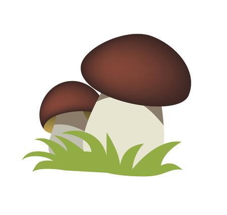 mycology: Fresh mushroom in two pieces isolated on white background. vector illustration
