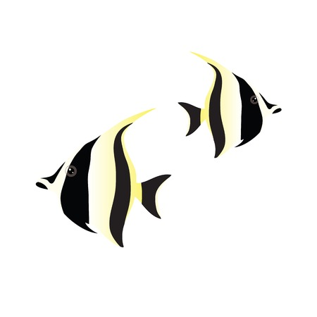 moorish idol: moorish idol isolated on white background. vector illustration