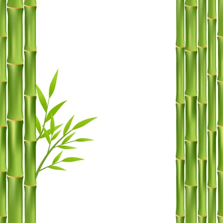 green bamboo: green bamboo frame isolated on white background. vector illustration