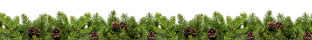 Christmas tree branches on white background as a border or template for christmas card Foto de archivo
